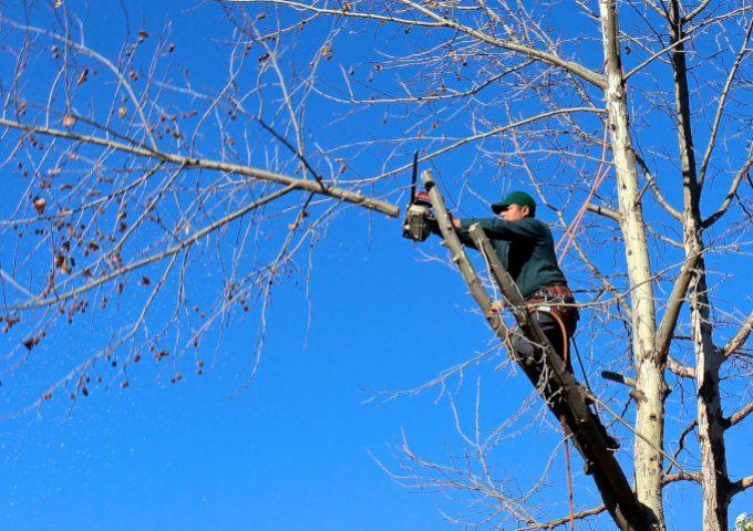 Baum schneiden_680x480px